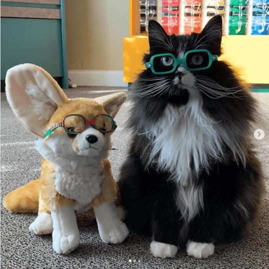 gato de óculos