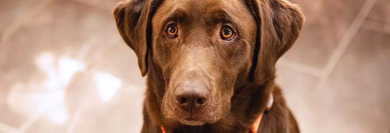 Óculos para cachorro: Sabia que existe? Veja como escolher para o seu pet